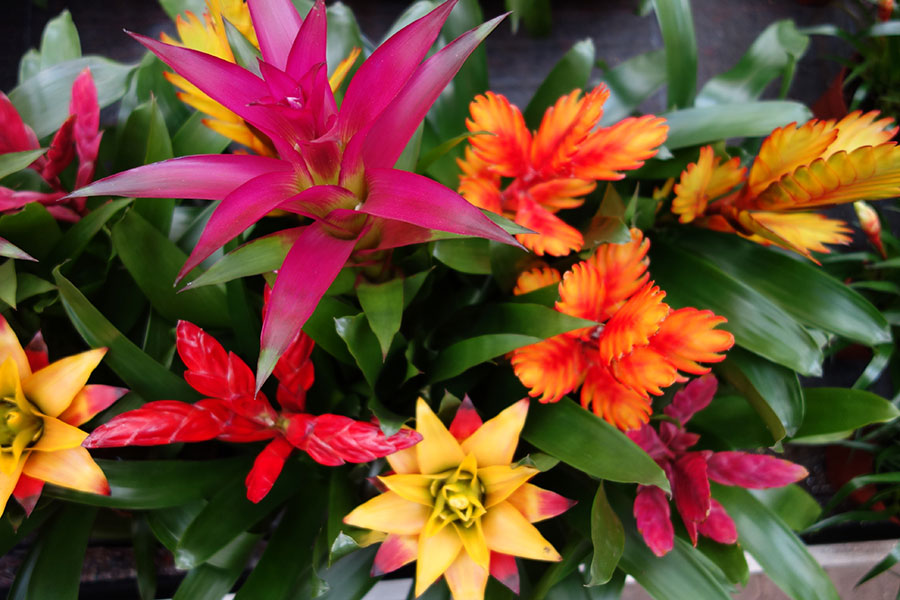 Topbloemen soest bloemen&planten